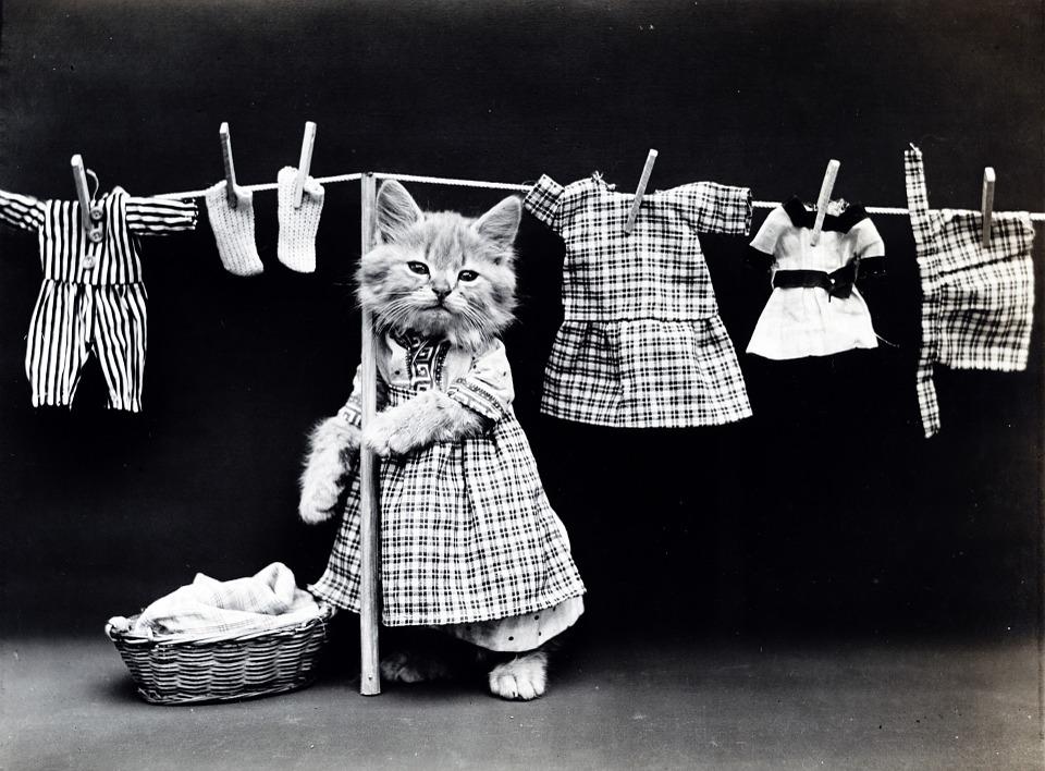 skalbimo mašina nesuka bugno kodėl, kodėl ir dar kartą kodėl skalbimo mašina nesuka bugno