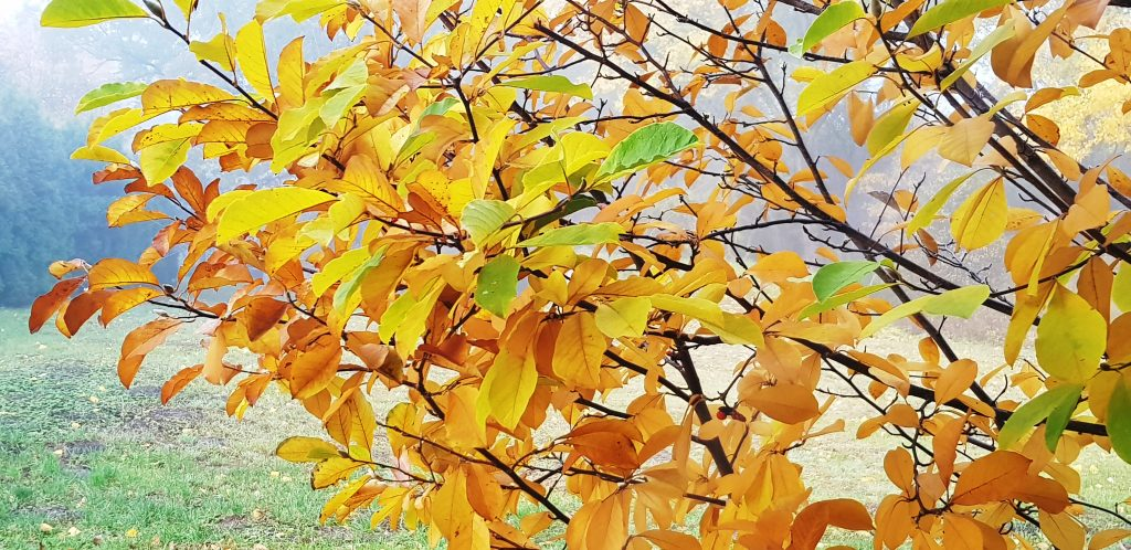 autumn leaves autumn tree leaves autumn tree leaves golden leaves of tree golden leaves tree brown leaves yellow leaves the trees are getting ready for sleep golden leaves tree